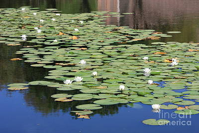 Reflection On Pond Photograph - Water Lily Pond by Carol Groenen