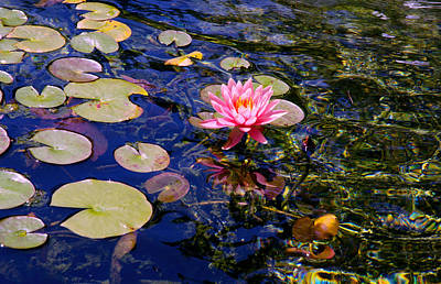 Photograph - Water Lily Pond by Marie Hicks