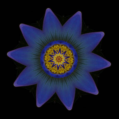 Photograph - Water Lily Purple by Stephanie Maatta Smith