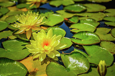 Photograph - Water Lily by Ralph Vazquez
