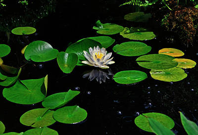 Photograph - Water Lily Reflection 007 by George Bostian