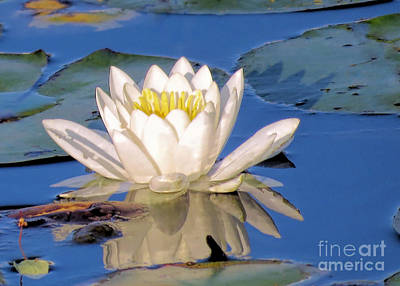 Photograph - Water Lily Reflection by Janice Drew