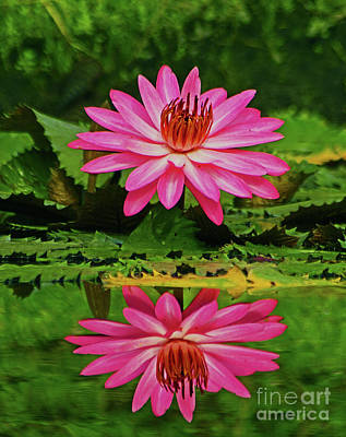 Photograph - Hot Pink Water Lily Reflection by Larry Nieland