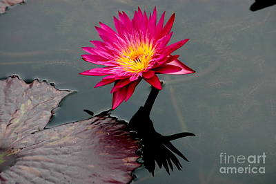 Photograph - Water Lily Reflection by Mark Gilman