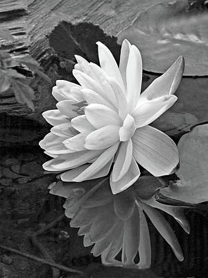 Photograph - Water Lily Reflections In Black And White by Gill Billington