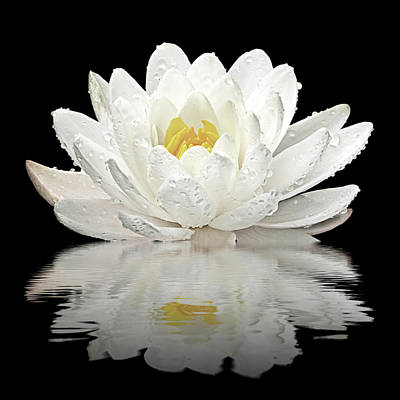 Photograph - Water Lily Reflections On Black by Gill Billington