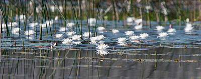 Photograph - Water Lily Shoreline by Michael Peychich