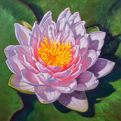 Darwin Painting - Water Lily Study 1 by Fiona Craig
