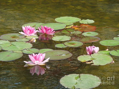 Water Lily Art Print by Tierong Fu