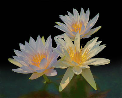 Photograph - Water Lily Trio by Nikolyn McDonald