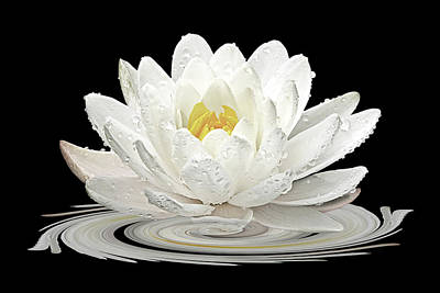 Photograph - Water Lily Whirl by Gill Billington