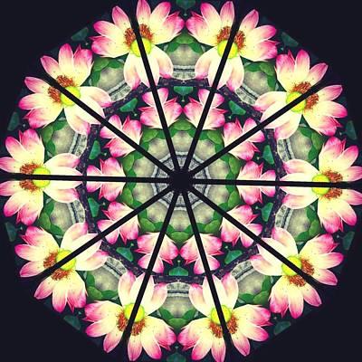 Water Lily Window Art Print by Steve Swindells
