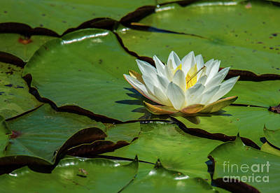 Photograph - Water Lily With Friend by Paul Mashburn