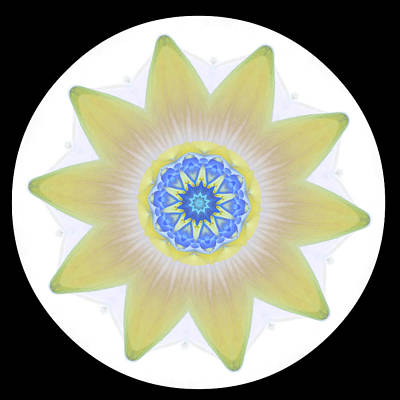 Water Lily Yellow Art Print