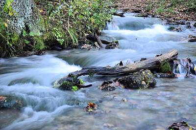 Photograph - Water Log by Bonfire Photography