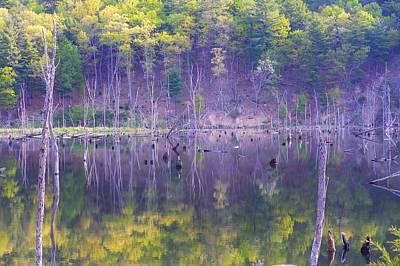 Photograph - Water Logged by Jewels Blake Hamrick