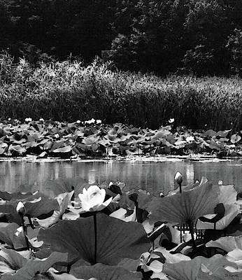 Photograph - Water Lotus Garden Bw by Shawna Rowe