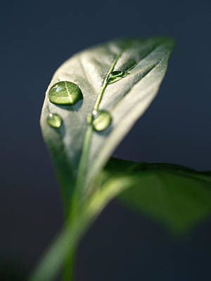 Photograph - Droplets by Andrew Kow