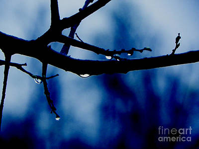 Digital Art - Water On Branch by Craig Walters