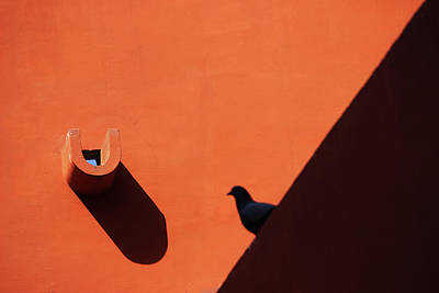 Photograph - Water Outlet Vs The Pigeon by Prakash Ghai