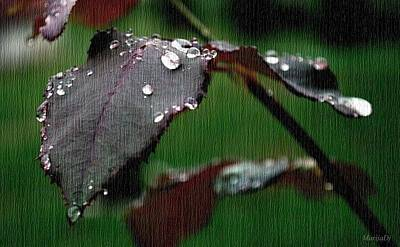 Photograph - Water Pearls by Marija Djedovic