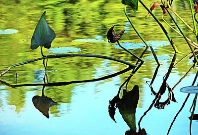 Photograph - Water Plants by Debbie Oppermann