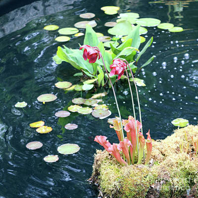 Photograph - Water Plants In Pond by Carol Groenen