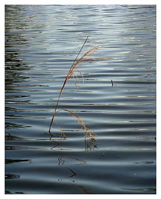 Water Reed Art Print by Dawn Davis