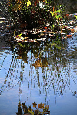 Photograph - Water Reflection Of Plant Growing In A Stream by Emanuel Tanjala