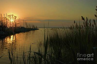 Photograph - Water Reflections by Diana Mary Sharpton
