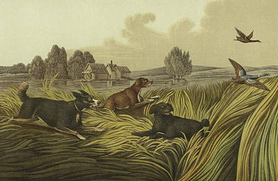 Spaniel Drawing - Water Spaniels by Henry Thomas Alken