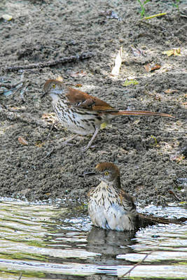 Photograph - Water Thrashing by William Tasker