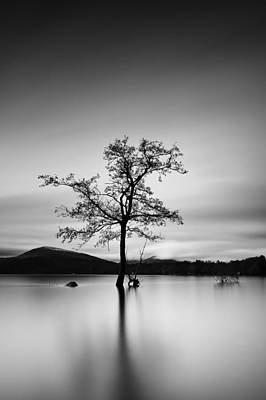 Photograph - Water Tree by Grant Glendinning