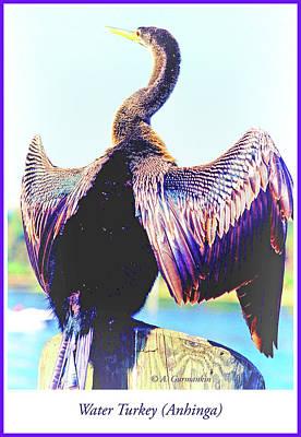 Anhinga Digital Art - Water Turkey Anhinga Drying Itswings by A Gurmankin