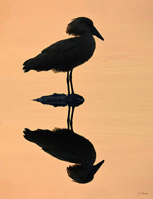 Photograph - Waterbird Silhouette At Dusk by Joe Bonita