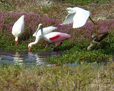 Photograph - Waterbirds Dining Club by Barbie Corbett-Newmin