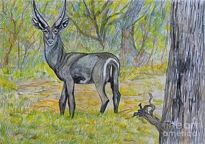 Waterbuck At Kruger Art Print by Caroline Street