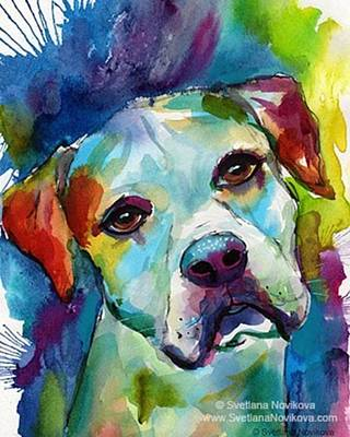 Pets Photograph - Watercolor American Bulldog Painting By by Svetlana Novikova