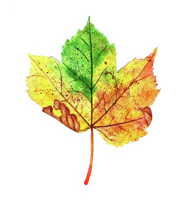 Maple Leaf Art Drawing - Watercolor Autumn Maple Leaf by Ekaterina Efanova