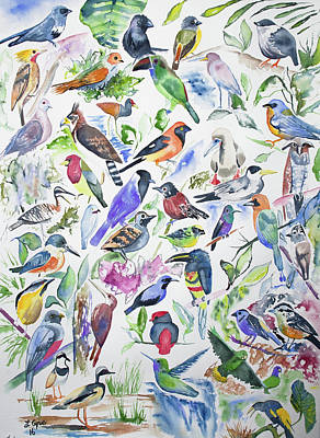 Flycatcher Painting - Watercolor - Birds Of Ecuador by Cascade Colors