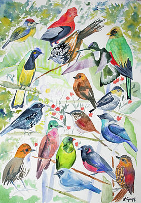 Flycatcher Painting - Watercolor - Birds Of San Isidro by Cascade Colors