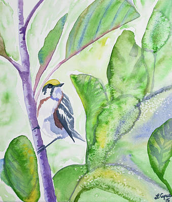 Painting - Watercolor - Chestnut-sided Warbler by Cascade Colors