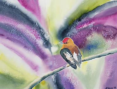 Painting - Watercolor - Club-winged Manakin by Cascade Colors