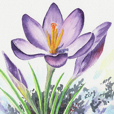 Painting - Watercolor Crocus Spring Flower Close Up by Irina Sztukowski