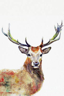 Watercolor Animals Painting - Watercolor Deer by Dim Dom