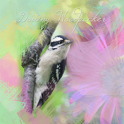 Photograph - Watercolor Downy Woodpecker With Painted Daisy by Heidi Hermes