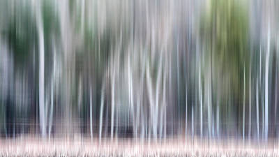 Photograph - Watercolor Forest by Bill Wakeley