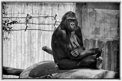 Loud Photograph - Watercolor Gorilla by Joan Carroll