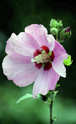 Photograph - Watercolor Hibiscus In The Rain 3066 W_2 by Steven Ward