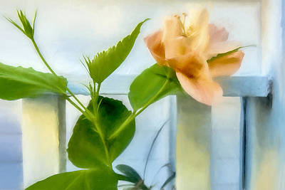 Photograph - Watercolor Hibiscus by Kay Brewer